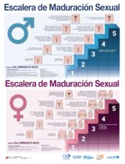 Afiches ilustrativos sobre las fases de la maduración sexual que experimentan niñas y niños.